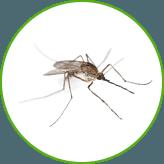 Уничтожение комаров на дачных участках и квартирах в Москве и Московской области с гарантией