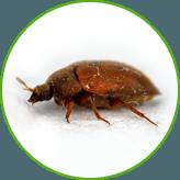 Уничтожение жука короеда в квартирах и домах. Производим обработку от короеда жилья и деревьев холодным и горячим туманом в Москве и Московской области с гарантией.