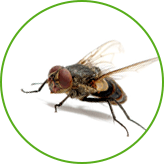 Уничтожение мух на предприятиях и в квартирах в Москве и Московской области по фиксированной стоимости с гарантией