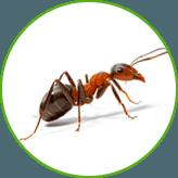 Уничтожение муравьев в квартирах и на дачных участках в Москве и Московской области с гарантией