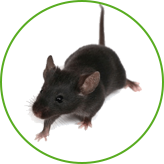 Уничтожение мышей в Москве и Московской области с гарантией