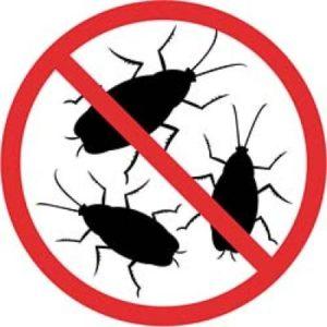 Тараканы  методы уничтожения и профилактики