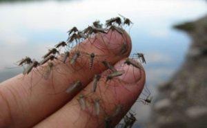 избавиться от комаров